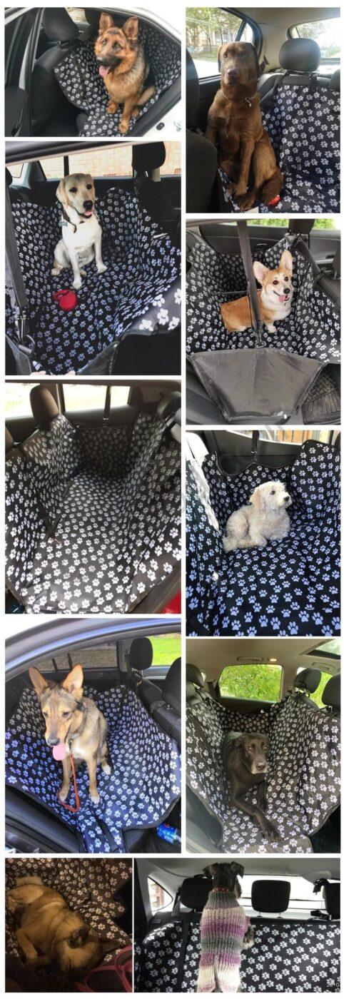 כיסוי לרכב כלבים מרוצים
